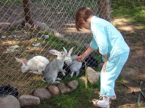 Агротуризм: кормление кроликов на ферме - база «Чудское подворье»
