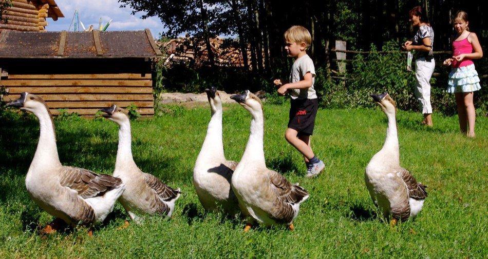 Отдых с детьми на Чудском озере на базе «Чудское подворье»